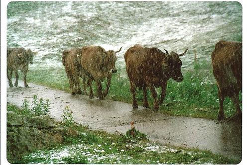 204 Und wenn es nach tagelangem Regen plötzlich still wird, unheimlich still, ..