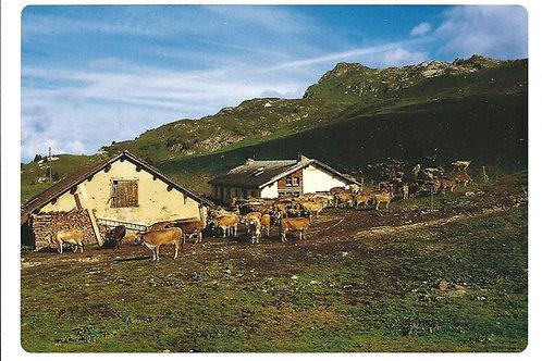 521 Kultur in Graubünden, z.B. Alp Albeina im Prättigau, morgens um halb neun