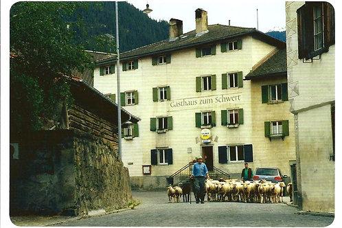 273 Schafe in Andeer