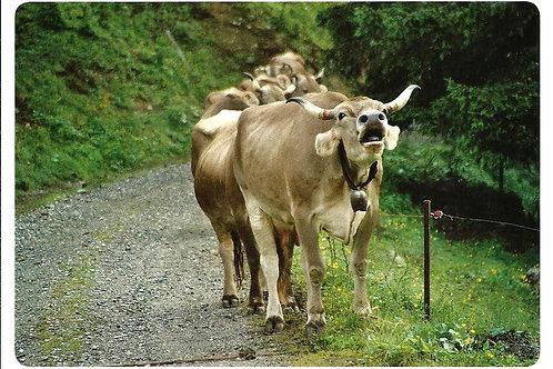 212 Die Würde des Menschen ist unantastbar, und die Würde der Tiere???