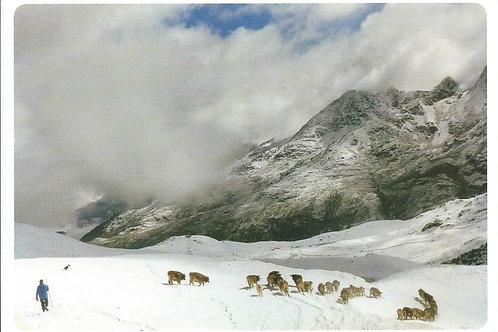 279 Tiere im Schnee