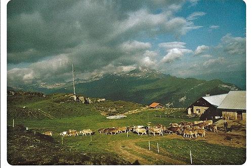 503 Kultur in Graubünden, z.B. Muttner Alp mit Blick ins Schams und Domleschg
