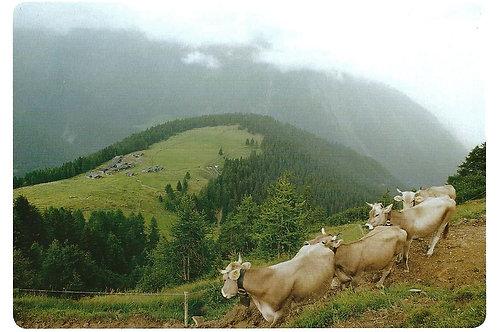 522 Kultur in Graubünden, z.B. Wiesner Alp, kurz vor einem Gewitter