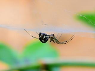 Wie die Spinne den Frauen half...