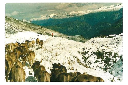 239 Schneefalgrenze