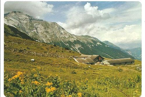 509 Kultur in Graubünden, zum Beispiel Taminser Alp Tanaz im Taminertal