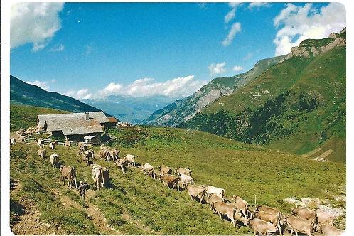 519 Kultur in Graubünden, zum Beispiel Alp Selva oberhalb von Vals, die Heimat v