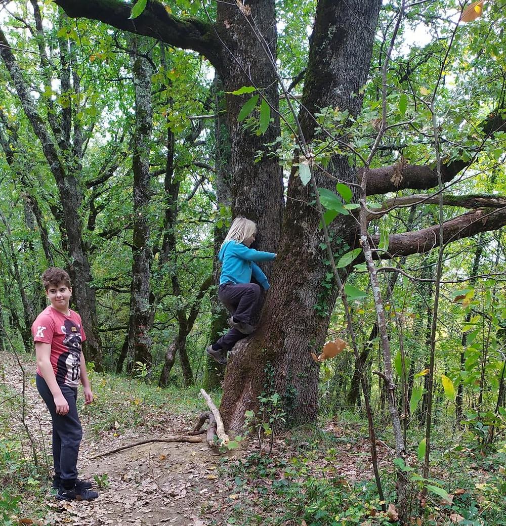 deux enfants qui grimpent aux arbres