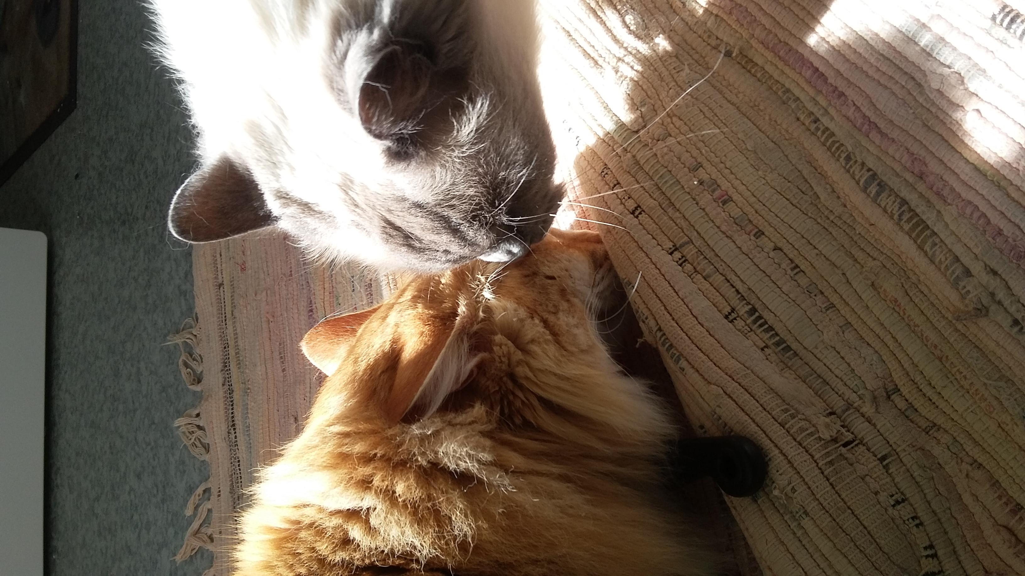Geb och Morris
