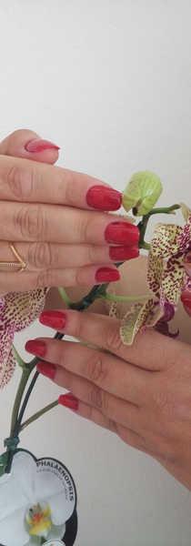 CONSULTORIA E ASSESSORIA/ Esmalteria Flor de Maio