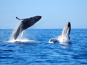 ballenas-nature.jpg
