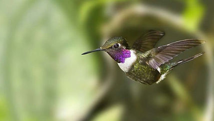 Ecuador-6.jpg