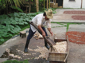 hacienda-cacao y mango.jpg