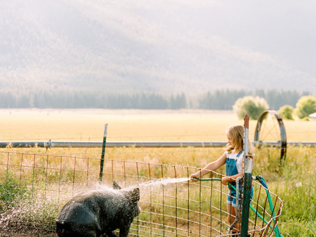 Heritage Pork: Why I'm raising (and selling) Berkshire pork