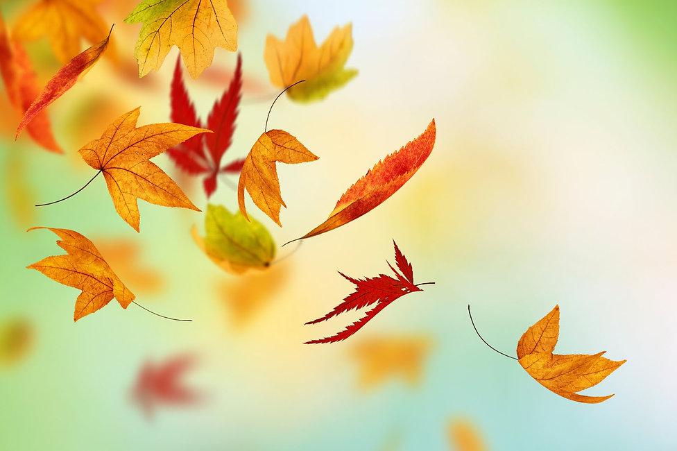 Fall-photo.jpg