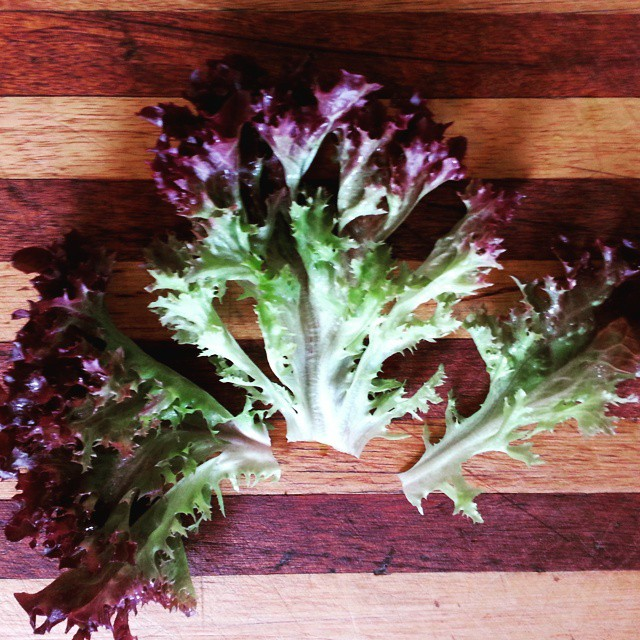 Instagram - Red sweet crisp lettuce leaves found in our Premium Salad Greens Mix