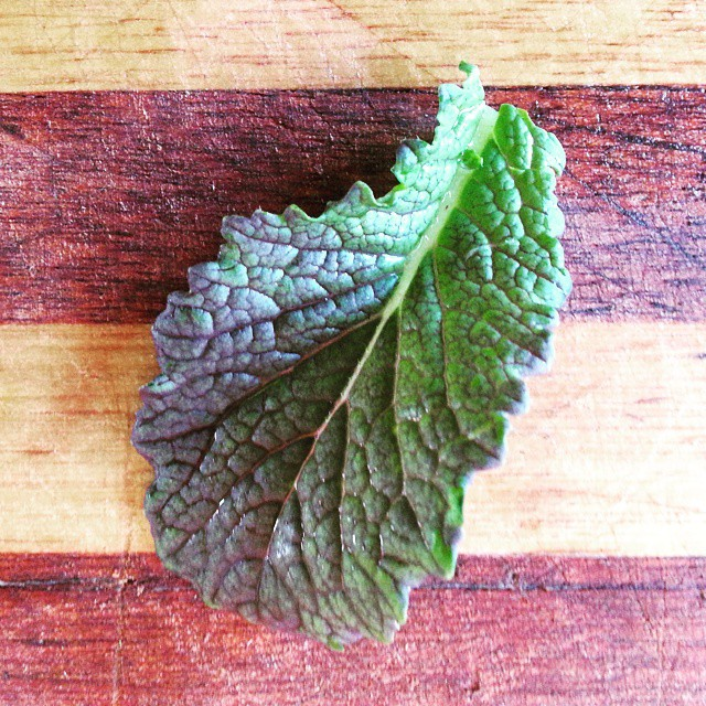 Instagram - Deep purple mustard green leaf