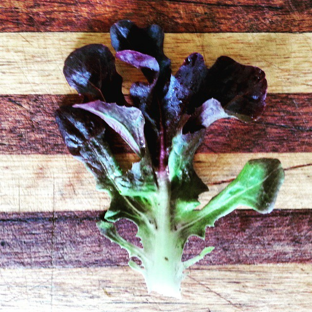 Instagram - Red oakleaf lettuce leaf found in our Premium Salad Greens Mix