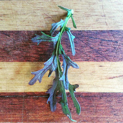 Instagram - Baby red frills mizuna leaf