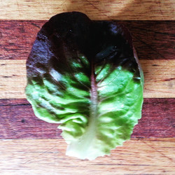 Instagram - Red buttercrunch lettuce leaf found in our Premium Salad Greens Mix