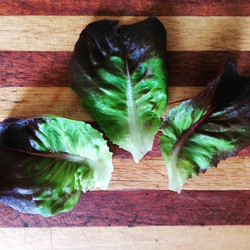 Instagram - Red buttercrunch lettuce leaves found in our Premium Salad Greens Mix