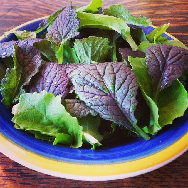 Instagram - Baby mustard greens first cut