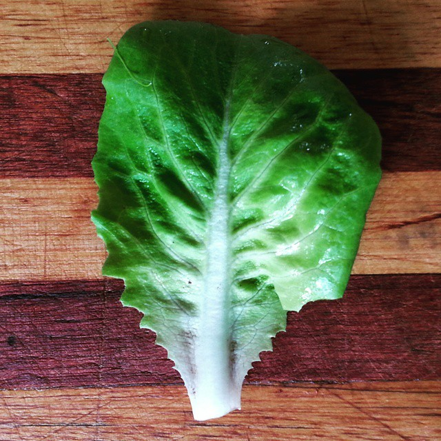 Instagram - Green buttercrunch lettuce leaf found in our Premium Salad Greens Mix
