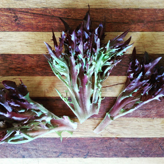 Instagram - Red incised lettuce leaves found in our Premium Salad Greens Mix