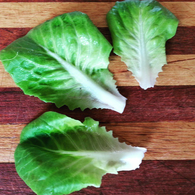 Instagram - Green buttercrunch lettuce leaves found in our Premium Salad Greens Mix