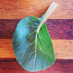 Instagram - Baby pak choi leaf