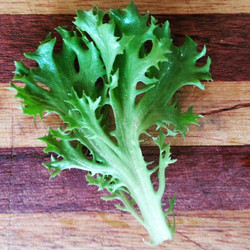 Instagram - Green sweet crisp lettuce leaf found in our Premium Salad Greens Mix