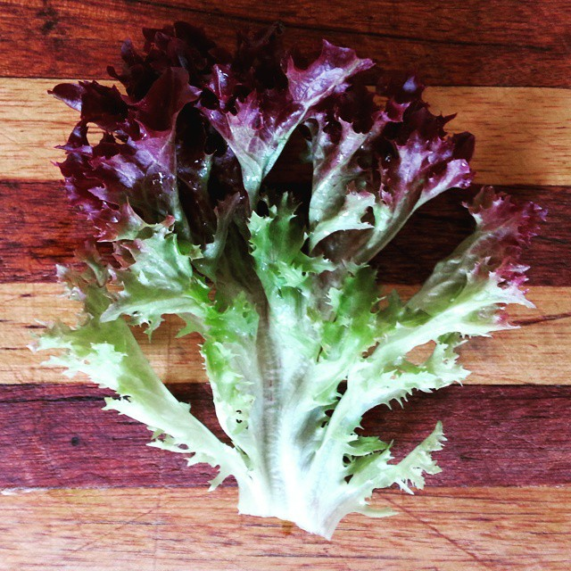Instagram - Red sweet crisp lettuce leaf found in our Premium Salad Greens Mix