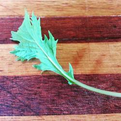 Instagram - Baby green mizuna leaf