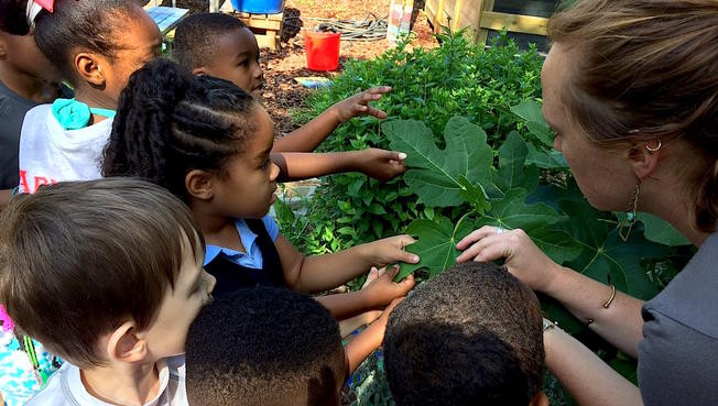 """As School Gardens Grow, So Do the Students – and Teachers – Who Tend Them """"If they grow it, if they take care of it, if someone shows them how to cook it, the students eat it 100 percent of the time"""" By Noreen O'Donnell and Emilie Mutert"""