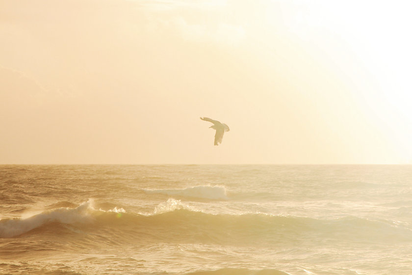 bird-soaring-over-water-waves-2347357.jp