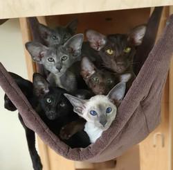 PRASKI * PL CATS