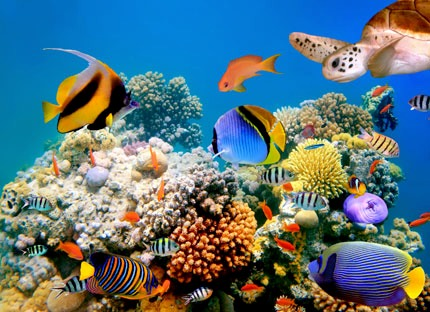 exotic-fish-aquarium_med