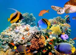 exotic-fish-aquarium_med