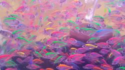 fish-1691728_1920