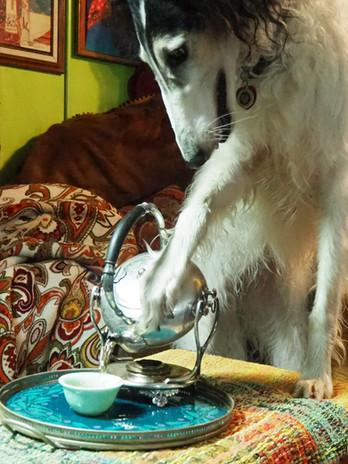 Elita's Personal Dog and Tea Trick.JPG