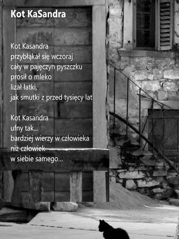 Kot KaSandra.jpg