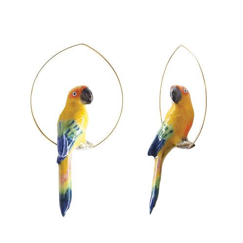 Brincos Papagaio sol