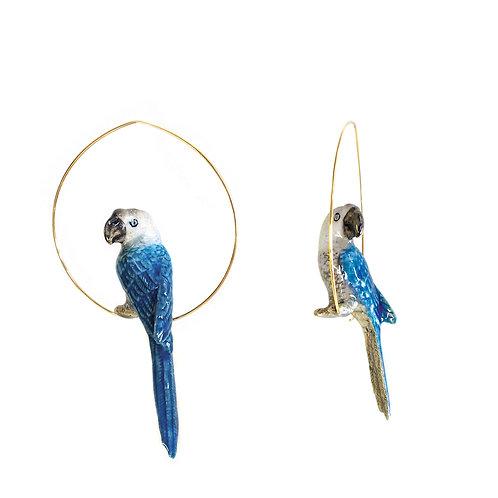 Brincos Papagaio azul
