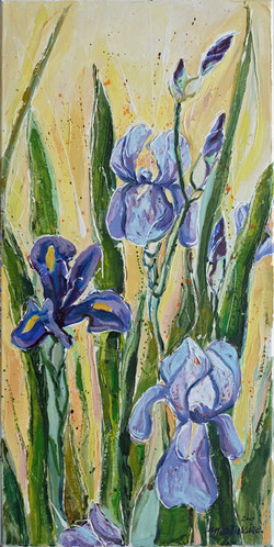 """""""Iris du matin"""""""
