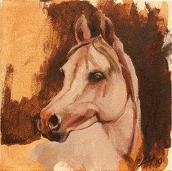 Equine Head Arab White (study 12)