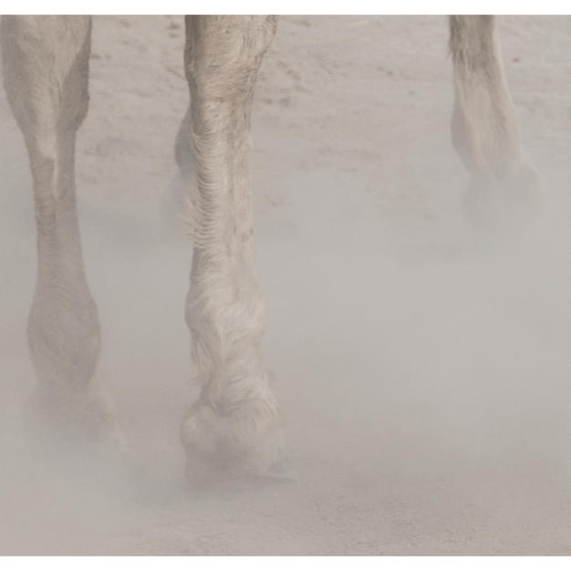 """chevaux sauvages 43º22'32""""n 4º48'37""""e #03 by Andrea C Morley"""