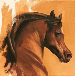 Equine Head Arab Chestnut (study 7)