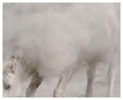 """chevaux sauvages 43º22'32""""N 4º48'37""""E #01"""