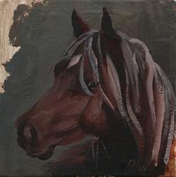 Equine Head Arab Chestnut (study 185
