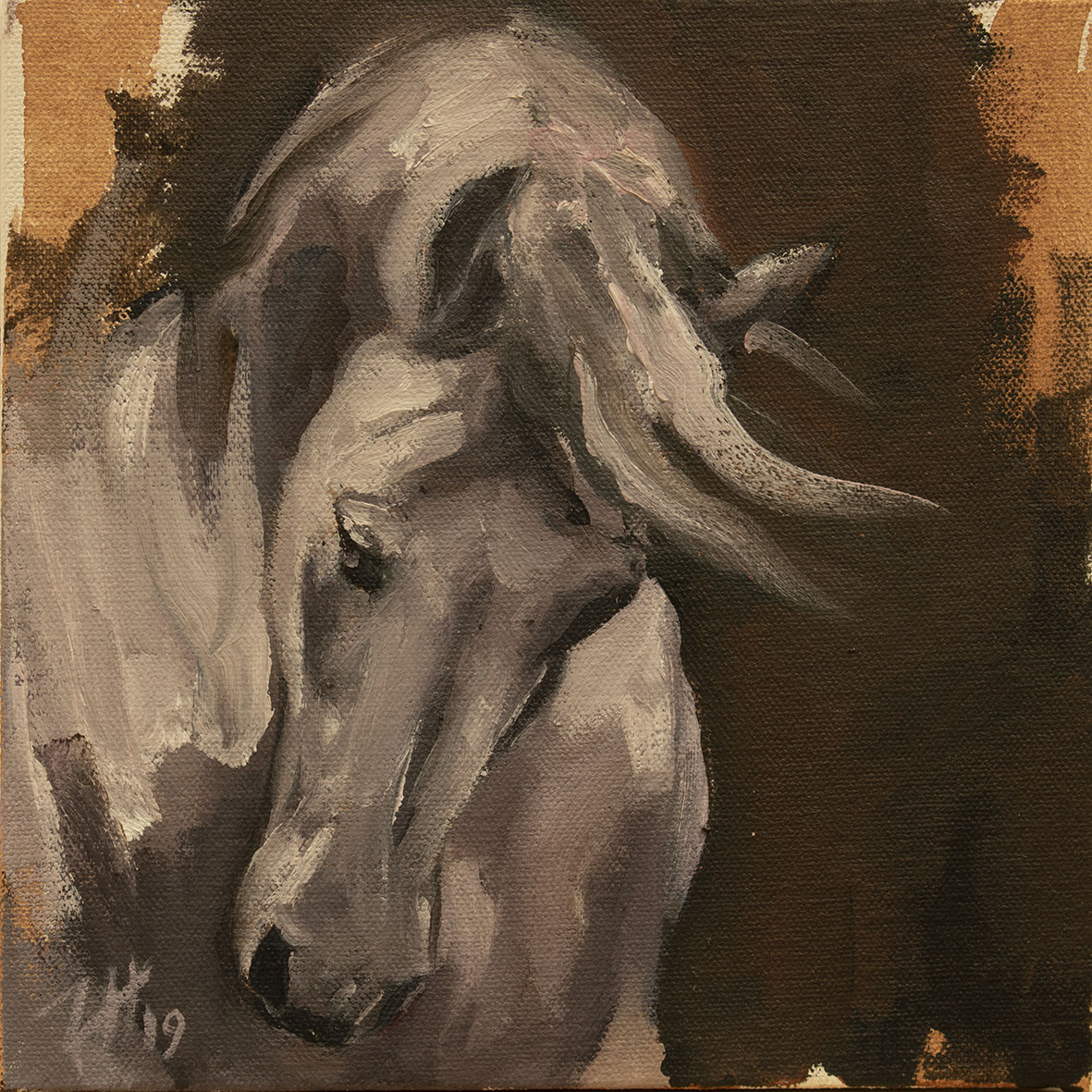 Equine Head Arab White (study  44)